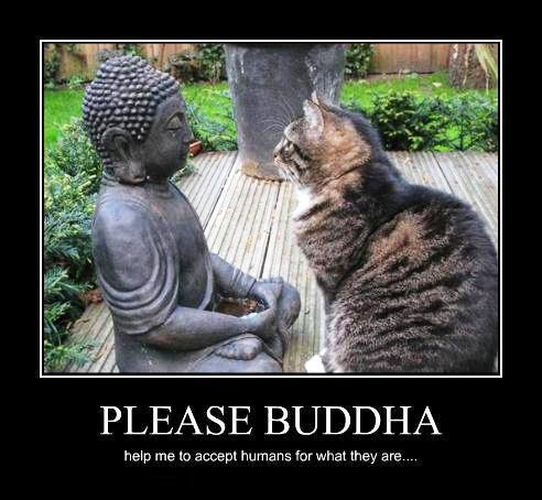 Йога и коты фото подборка